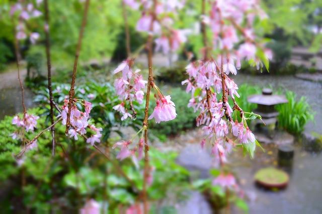 【博多の隠れた観光スポット】楽水園・日本庭園を眺めながら抹茶でホッと一息