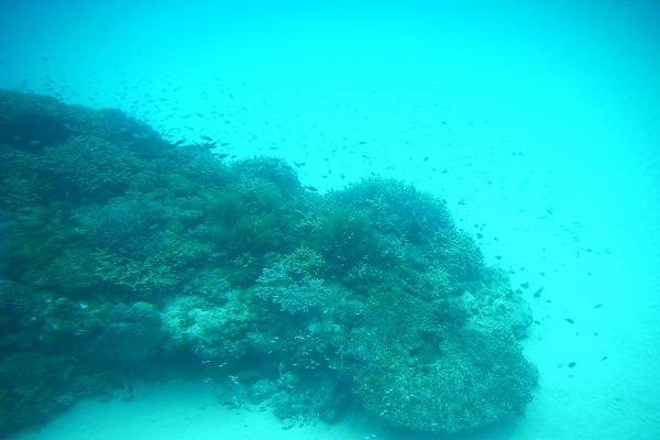 【日帰りで渡嘉敷島へ】阿波連ビーチの絶景・水中観光船に大満足