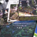沖縄県立博物館・美術館【やんばるの森の美写真展】に行ってきた