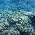 海レジャーにおすすめ「サンゴに優しい日焼け止め」で環境に配慮を