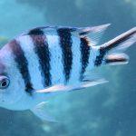 【慶良間諸島で半日シュノーケル】サンゴと魚に癒される♪