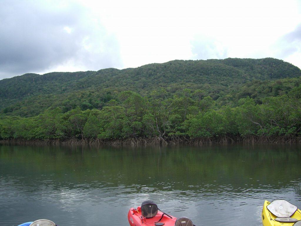 【西表島のおすすめツアー】大自然と触れ合うカヌー&トレッキング