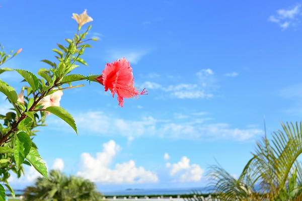 沖縄県北部・名護周辺の観光スポット情報