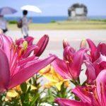 ゆり祭り開催で沸く伊江島へクルーズツアーで行ってみた!4月末~5月初旬