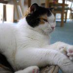 那覇市の癒し空間・猫カフェ「にゃんそ~れ」で顔がにやけるひと時を過ごしてきた
