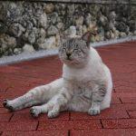 猫好きはたまらん!沖縄はにゃんこ天国♪