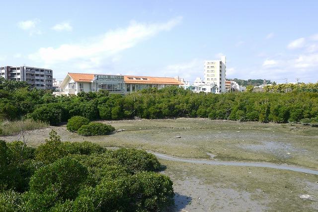 【漫湖水鳥・湿地センター】マングローブに囲まれた水鳥たちのオアシス