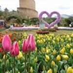 花だらけの熱帯ドリームセンターで大興奮!洋蘭博覧会2018・チューリップ畑
