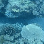 3月5日はサンゴの日|きれいな海を守るためにできることについて学ぼう